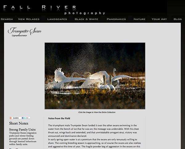 Trumpeter Swan Webpage